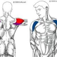 Monday 11/19/2012 -- Shoulder Workout