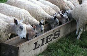 sheeplies